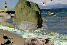 Garden design:Seagulls on the Beach Reefs.2