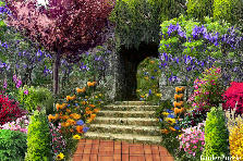 Garden design:CONGRATULATIONS DARLING!!!!!!!!
