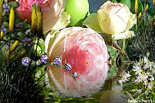 Garden design:Rose reflected in water.