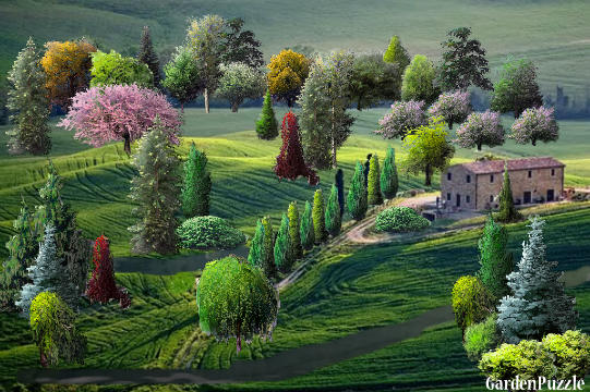 Italian villa gardenpuzzle online garden planning tool for Italian garden design