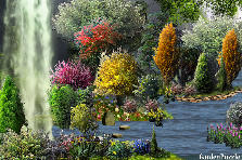 Garden design:Rain Fall