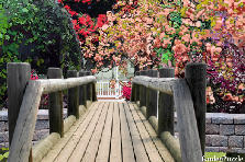 Garden design:japanese dream