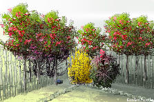 Garden design:town garden option1