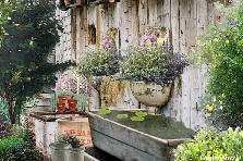 Garden design:Old Water Trough Garden