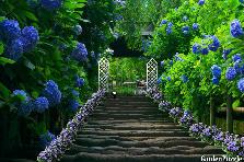 Garden design:Stairs