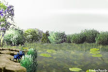 Garden design:secret pond
