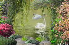 Garden design:two swans