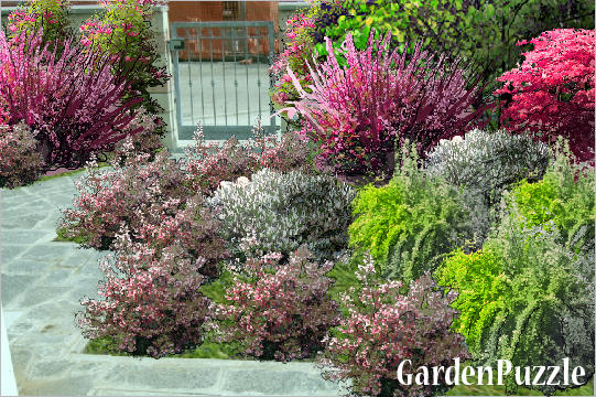 Landscaping Shrubs Crossword : Mixed border gardenpuzzle garden planning tool