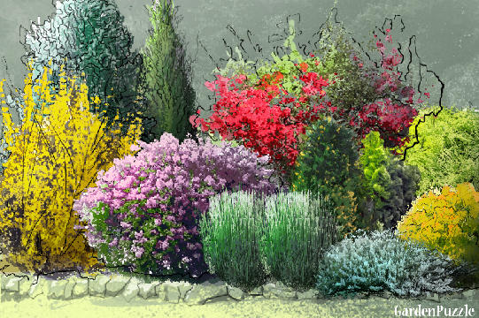 Bright shrubs gardenpuzzle online garden planning tool for Garden shrubs