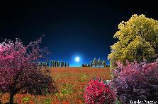 Garden design:moonlight