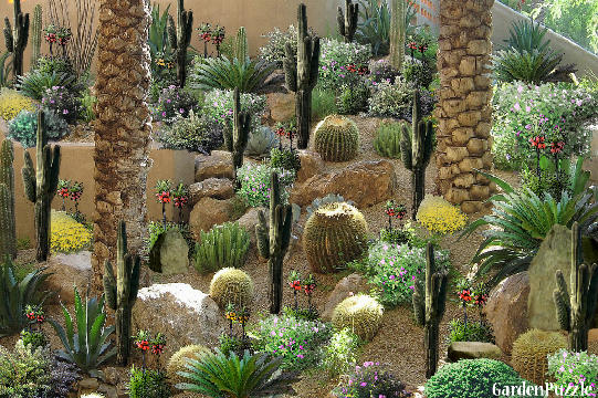 Cactus garden gardenpuzzle online garden planning tool for Cactus garden designs